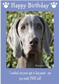 "Weimaraner-Happy Birthday - ""Are You Really THAT Old"" Theme"